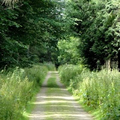 Harebushes Wood