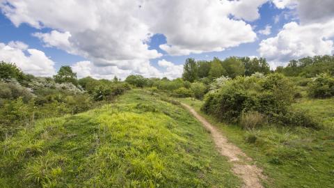 Ufton Fields Nature Reserve