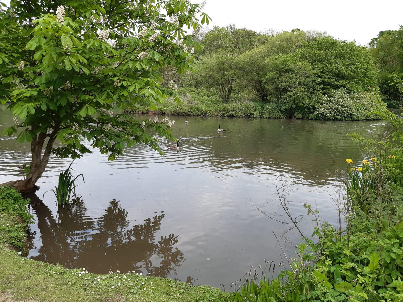 Tocil Wood & Nature Reserve