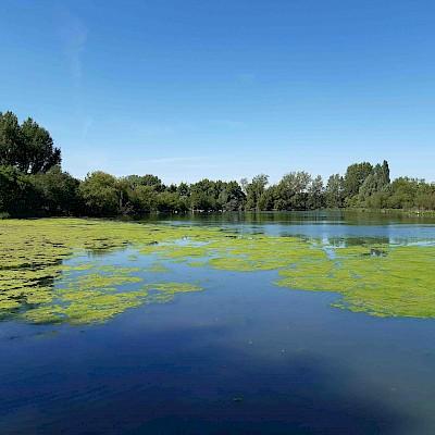 Wyken Slough Nature Reserve