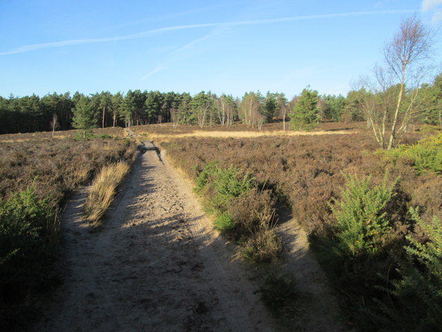 Hankley Common, Tilford