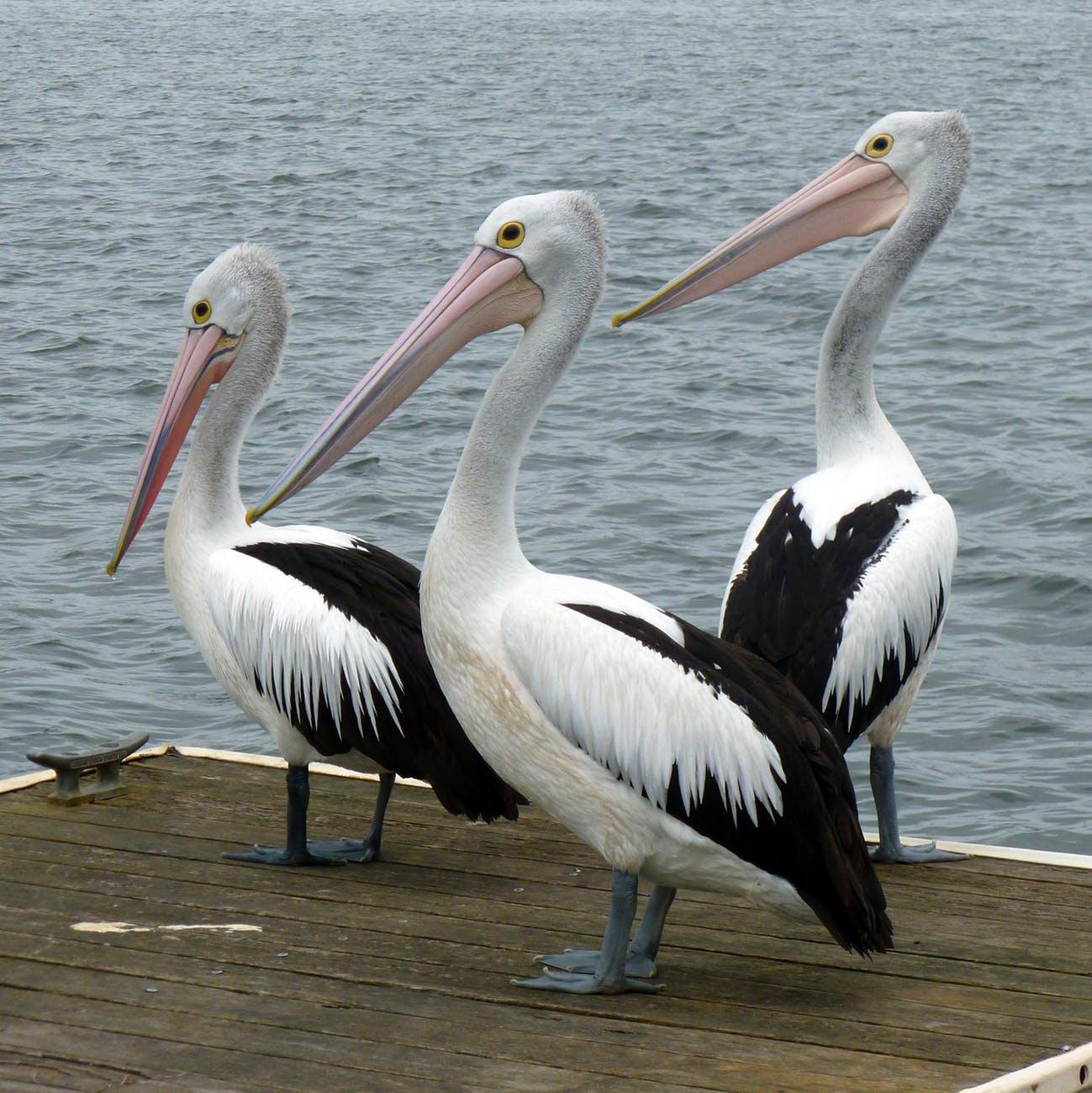 Birdworld Surrey