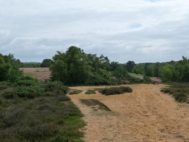 Kingsley Common