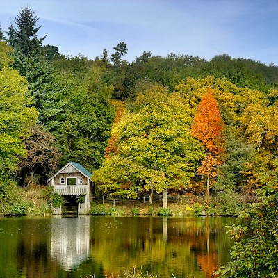Winkworth Arboretum | National Trust