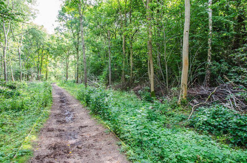 Skellingthorpe Old Wood Circular Walk