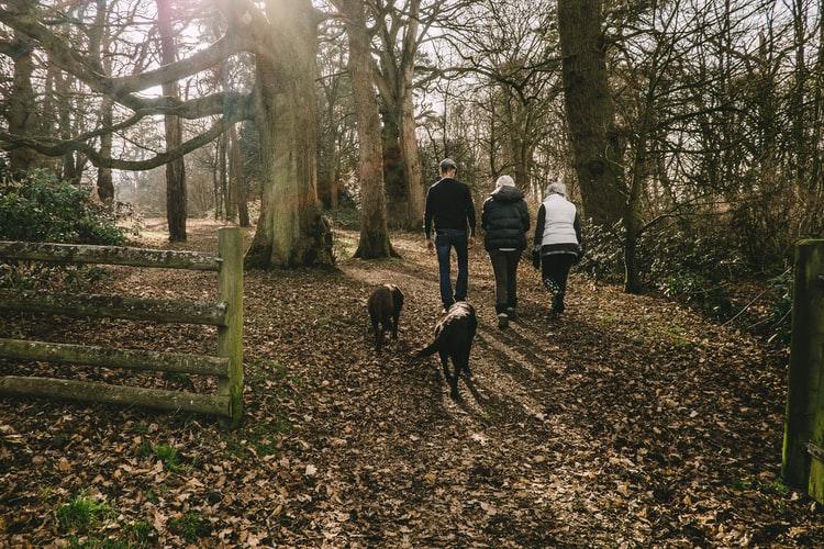 Nocton Wood Walk
