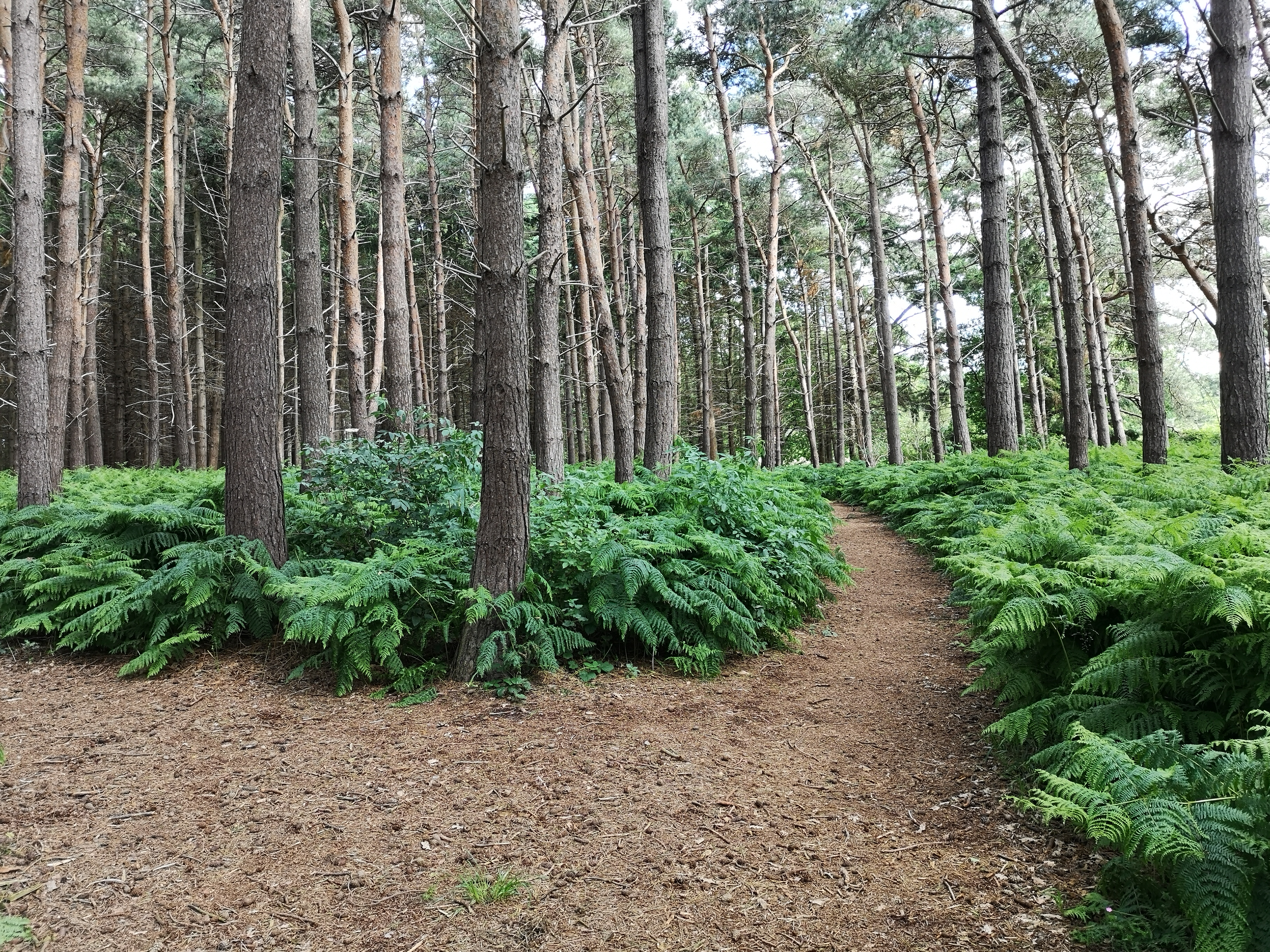 Potterhanworth and Burnt Woods Woodland Walk