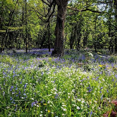 Rigsby Wood