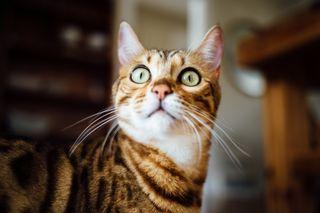 Cat of millennials home buyers