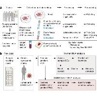 COVID-19 新型コロナウイルス