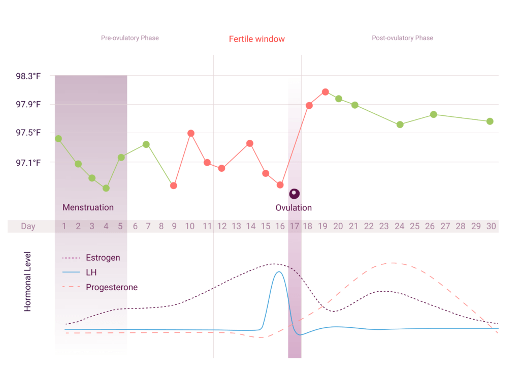 Ovulation and Temperature | Tracking Fertility | Natural Cycles