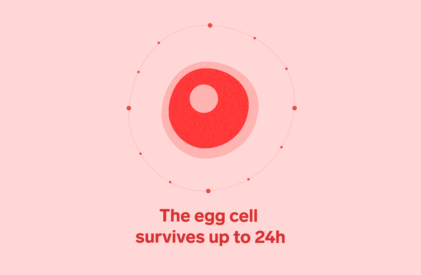5 Facts About the Female Egg Cell | Human Eggs | Natural Cycles