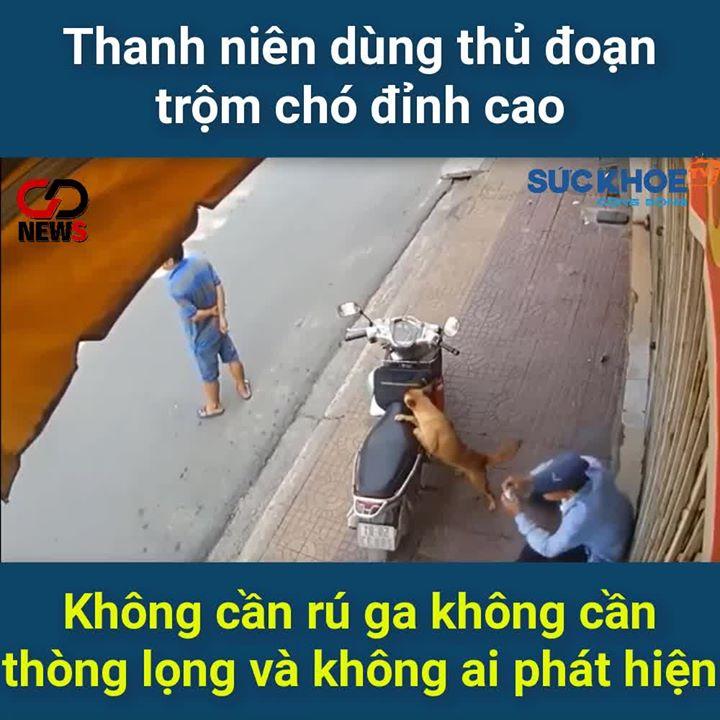 🎬🍀  Tưởng thanh niên quý chó nên mới nựng ai dè ... - Photos byNguyen Huy Hoang