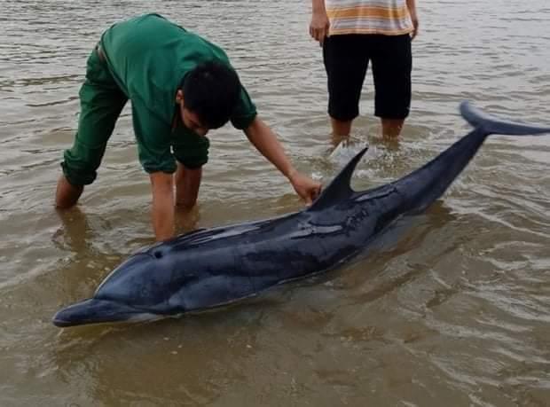 💥   Hoan hô các chiến sỹ biên phòng Hội An  Cứu hộ cá heo nặng trên 70 kg dạt vào... - Photos byLinh Sky