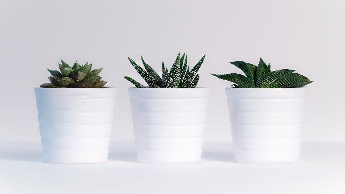 best office plants