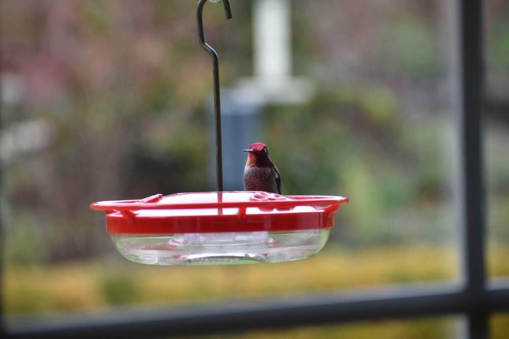 How to Help Birds Survive Winter