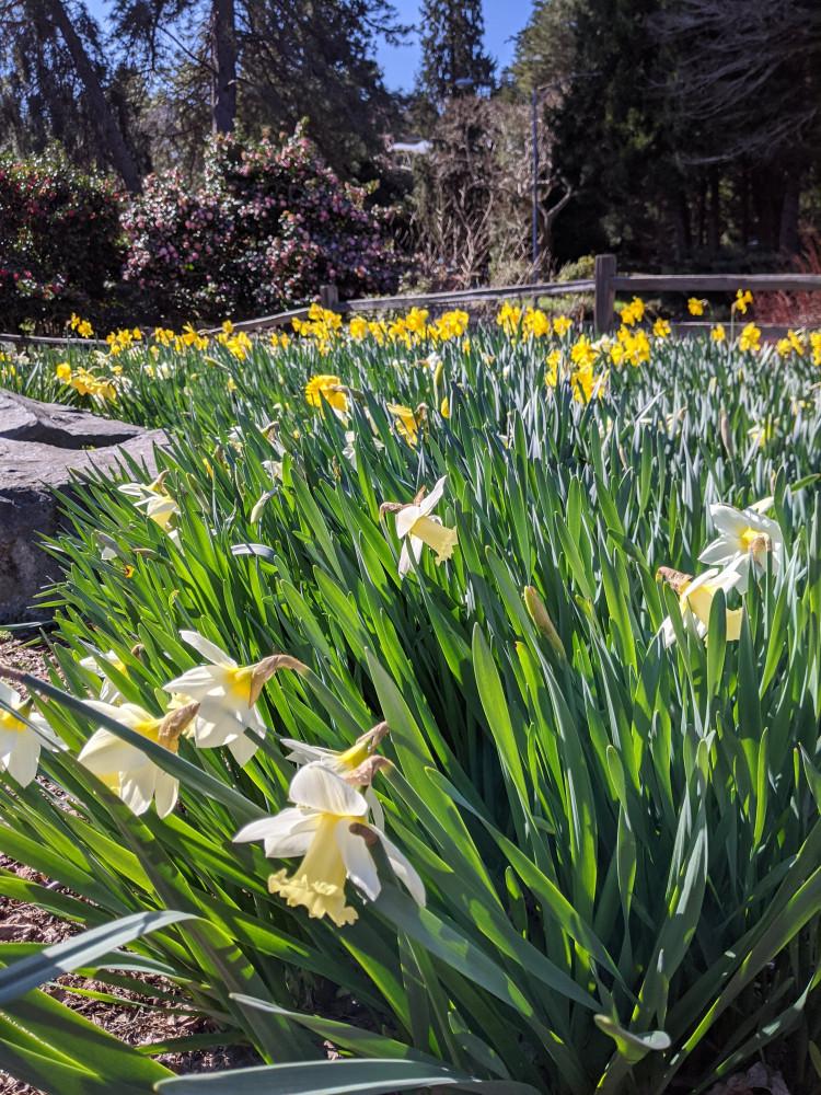 What Grows Best in Western Washington