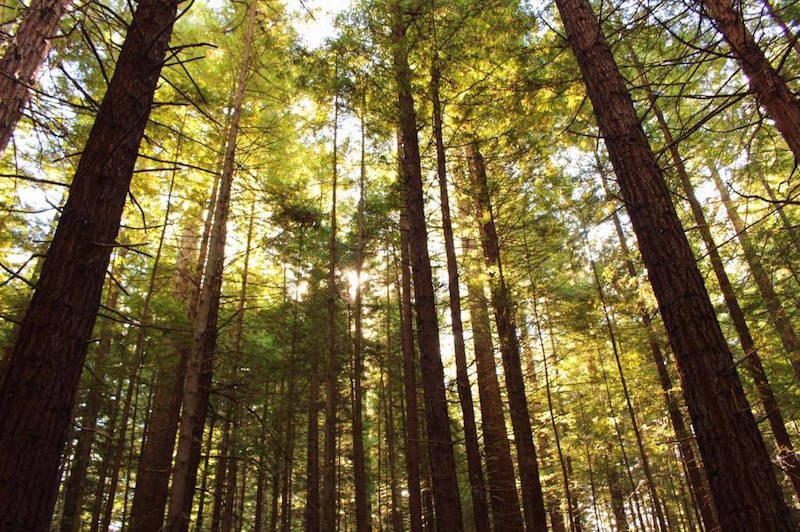 Redwood forest⑤