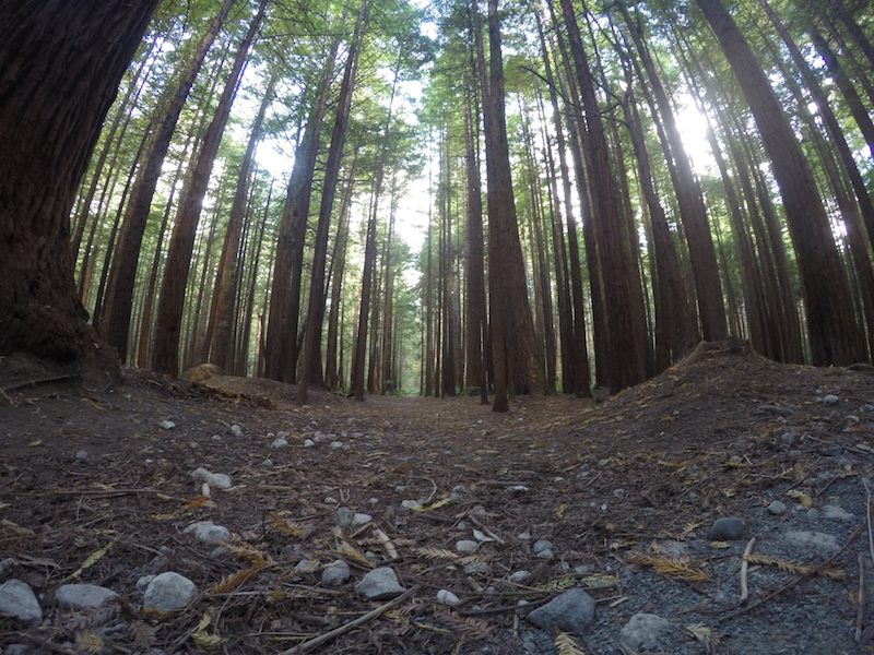 Redwood forest③