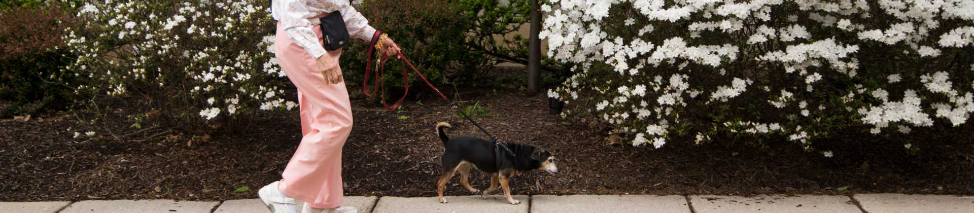 Image of the legs of a senior woman as she walks her dog