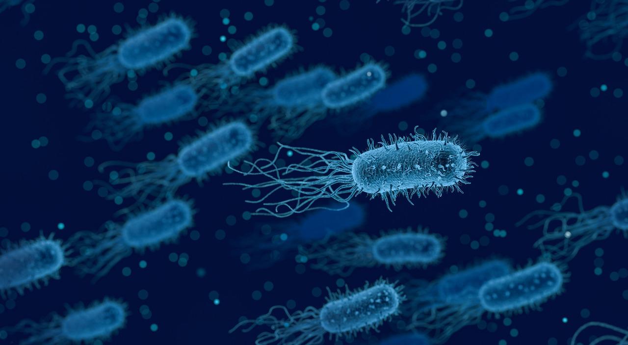Descubren un nuevo ecosistema en las profundidades marinas