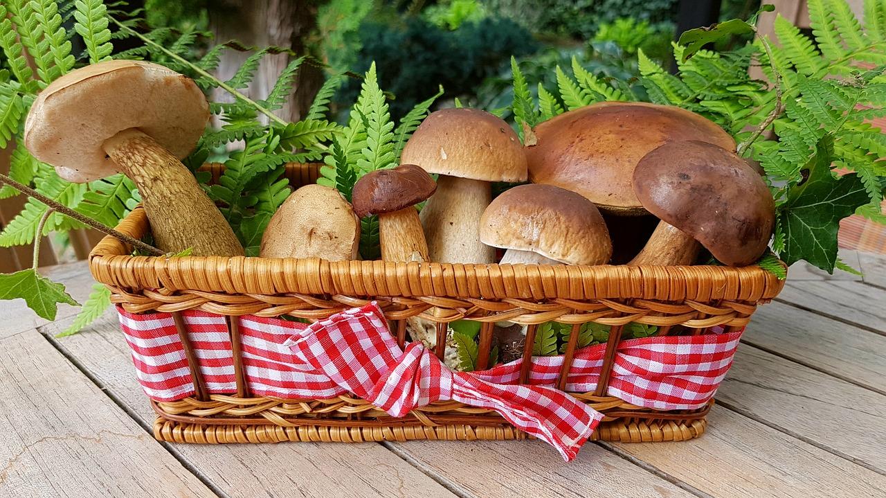 Los hongos podrían ayudar a combatir el cáncer de próstata