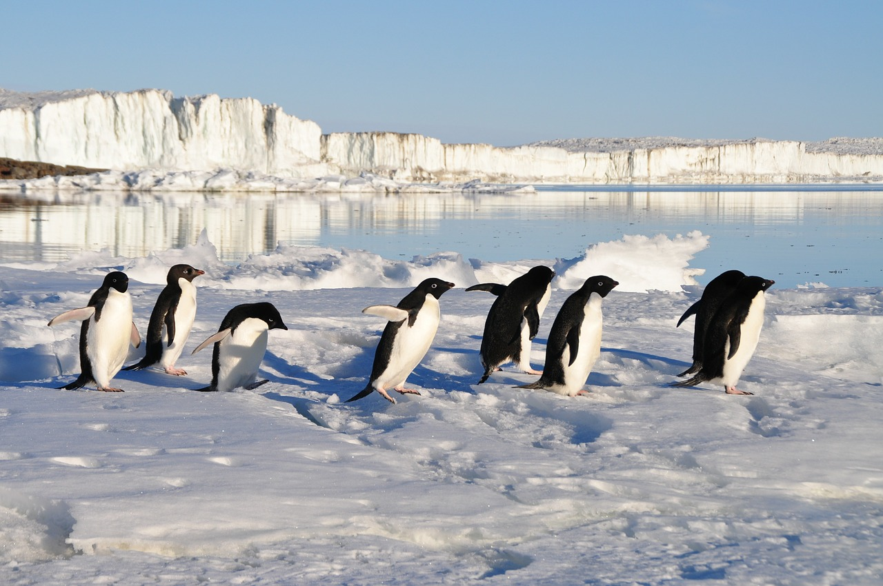Encuentran colonia de animales que estuvo escondida por más de 2.000 años