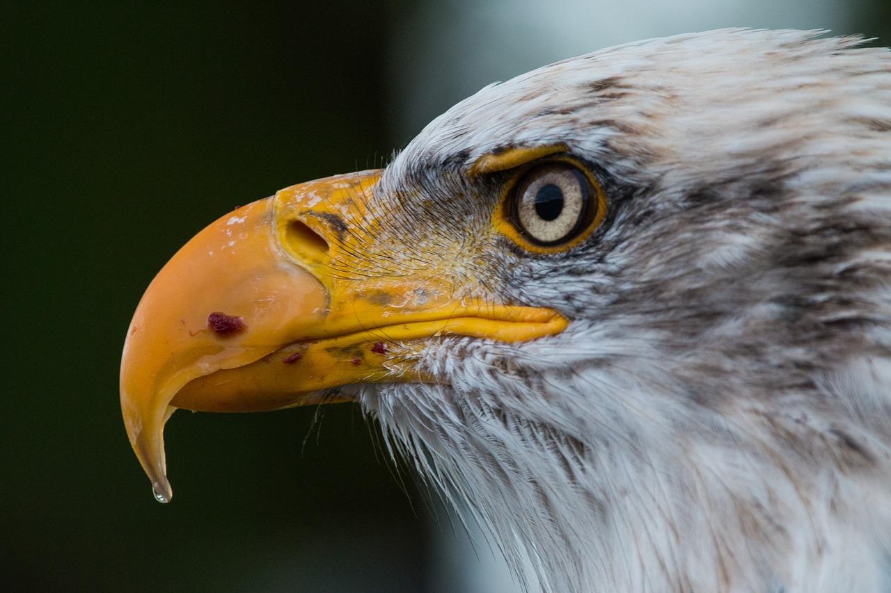 Desarrollan una cámara que permite reproducir la visión de las aves