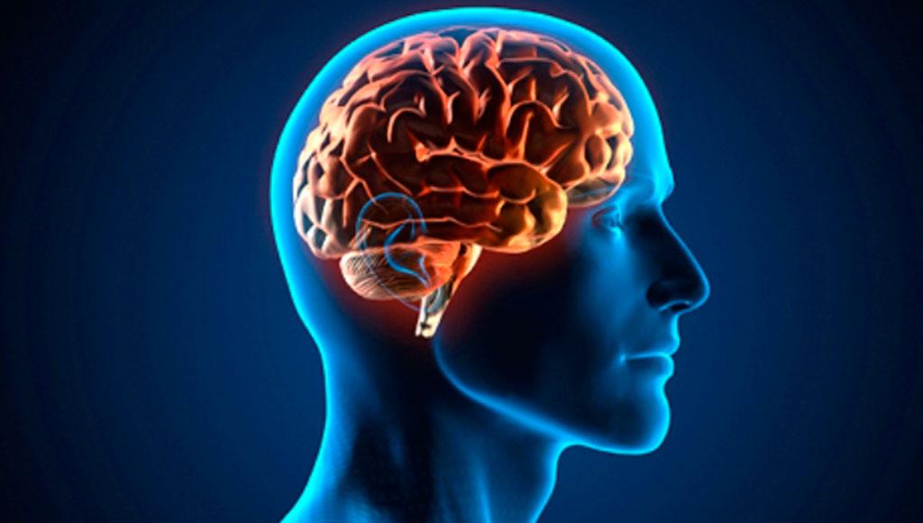 Estas son las consecuencias que trae la grasa abdominal a tu salud cerebral