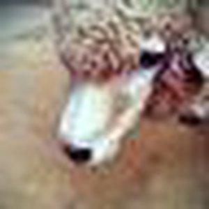 @sheep756