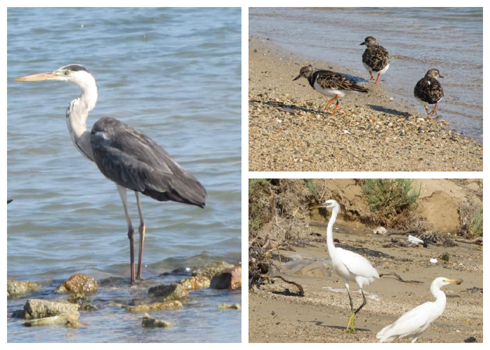 Migrating Bird Descend Upon Red Sea To Nest & Feed Due To Lack Of Human Activities On The Coast