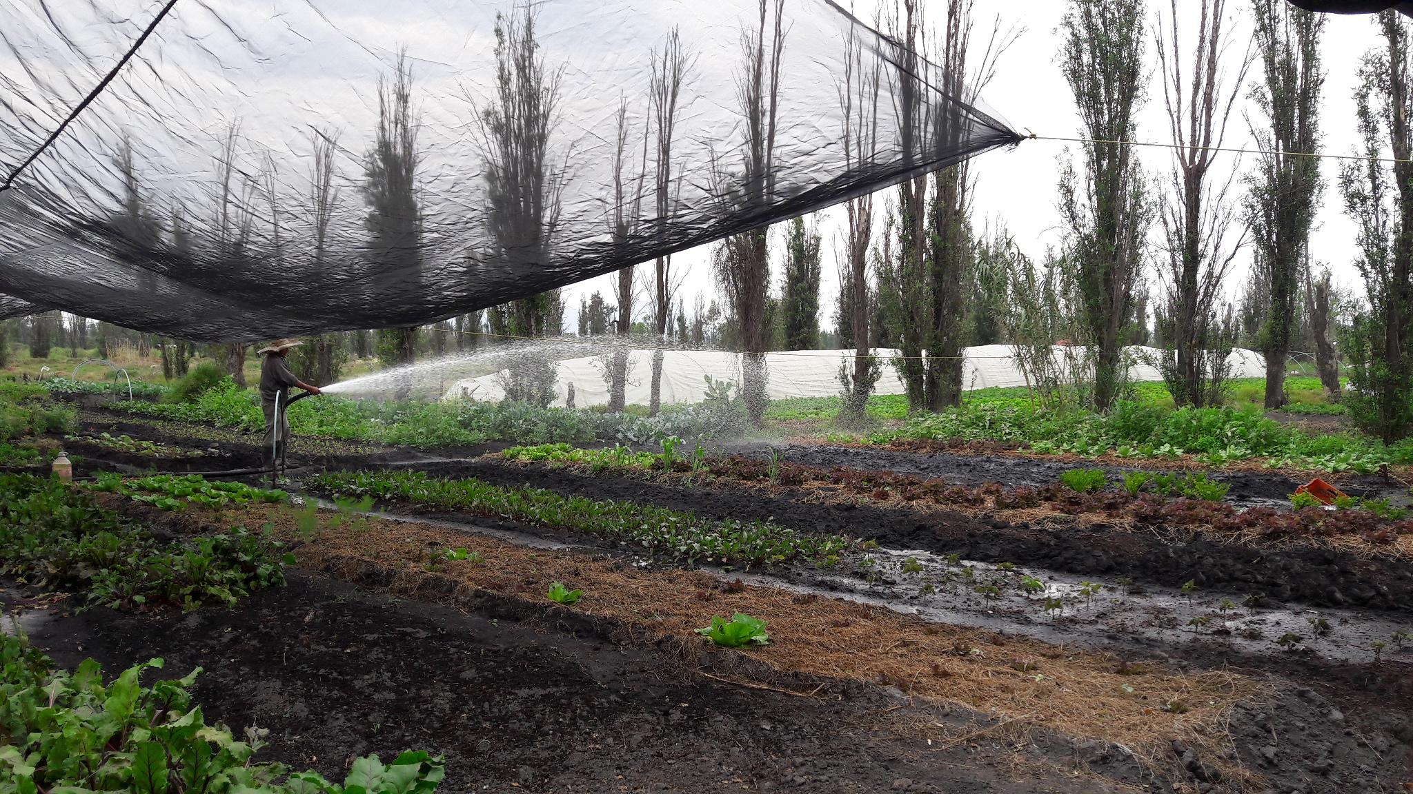 Otra mirada a Xochimilco