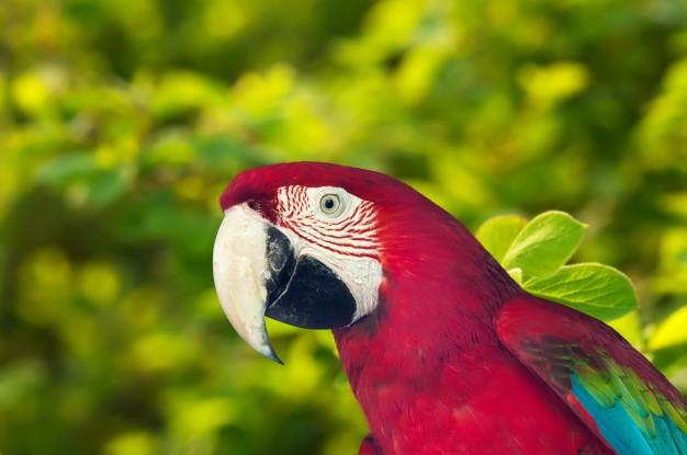 macaw-papagay-contra-la-naturaleza_1398-1185.jpg