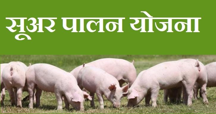 सूअर-पालन-योजना