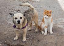 Anjing dan Kucing Tak Mungkin Tularkan Virus Corona Covid-19, Ini Alasannya