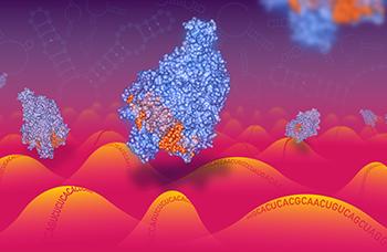 TARGETING RNA: Cas13 enzymes traveling along a RNA landscape. Artist: Christian Stolte