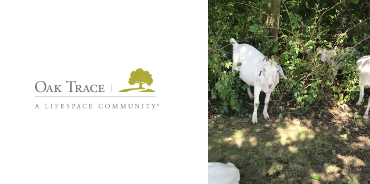 The Oak Trace logo with a different photo of two goats next to it