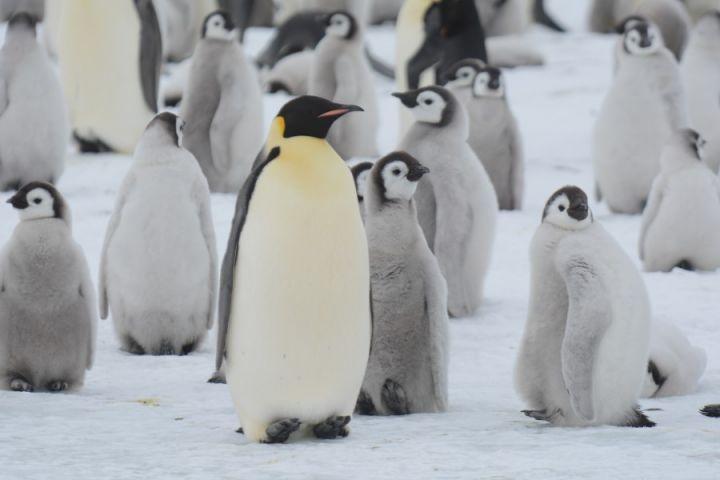 12 Tips to Help Keep Birds Safe During an Antarctic Cruise