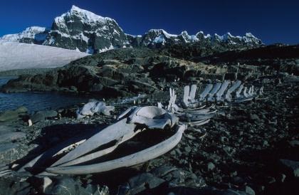 Antarctic Peninsula History#}