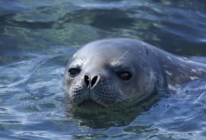Whales and seals of the Weddell Sea#}