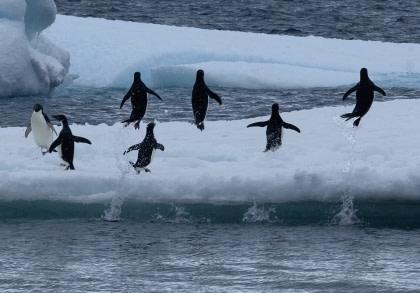 Adelie-Pinguine & Weddell-Meer#}