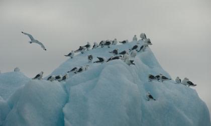 Noord Spitsbergen, De Arctische zomer - Zomerzonnewende