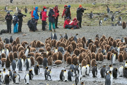Falkland Islands – South Georgia – Elephant Island – Antarctica – de Zuidpoolcirkel