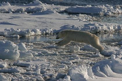 Norte de Spitsbergen, Buscando el oso polar y la bolsa de hielo - Observación de aves