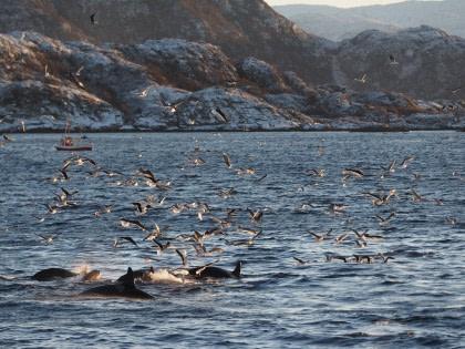 Nord Norwegen, Nordlicht & Wale - Neujahr