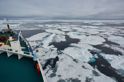 North Spitsbergen, In search of Polar Bear & Pack Ice - Birding