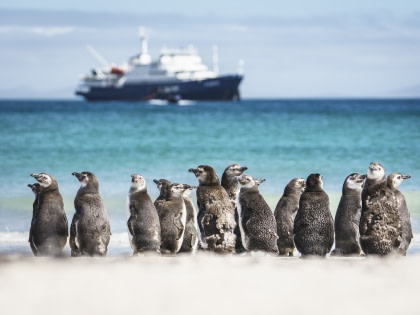 Falkland Islands – South Georgia – Het Antarctisch Schiereiland