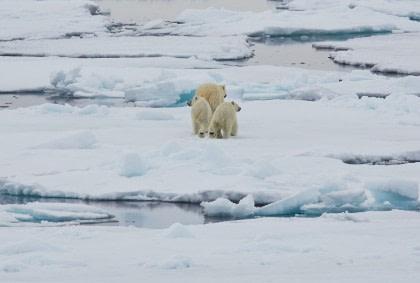 Norte de Spitsbergen, Buscando el oso polar y la bolsa de hielo