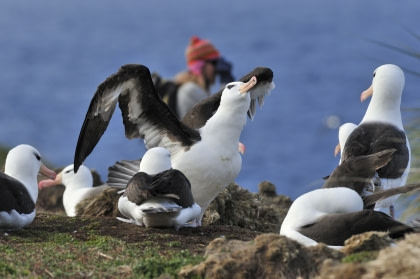Antarctica - Elephant Island - Falkland Islands - Birding