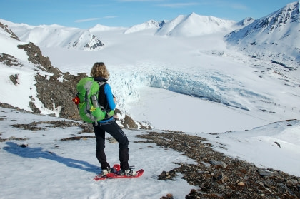 North Spitsbergen, In search of Polar Bear & Pack Ice - Birding